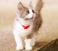 猫の資格をとろう!いろんな猫の資格
