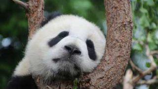 動物園で働く動物飼育員になるには?