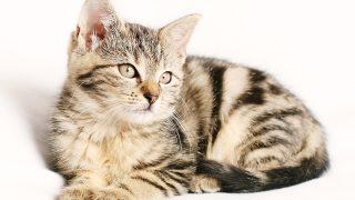 猫の資格キャットグルーマーライセンスとは