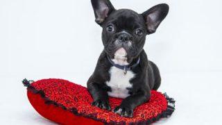 ペット販売士の資格とは?家庭動物販売士と比較